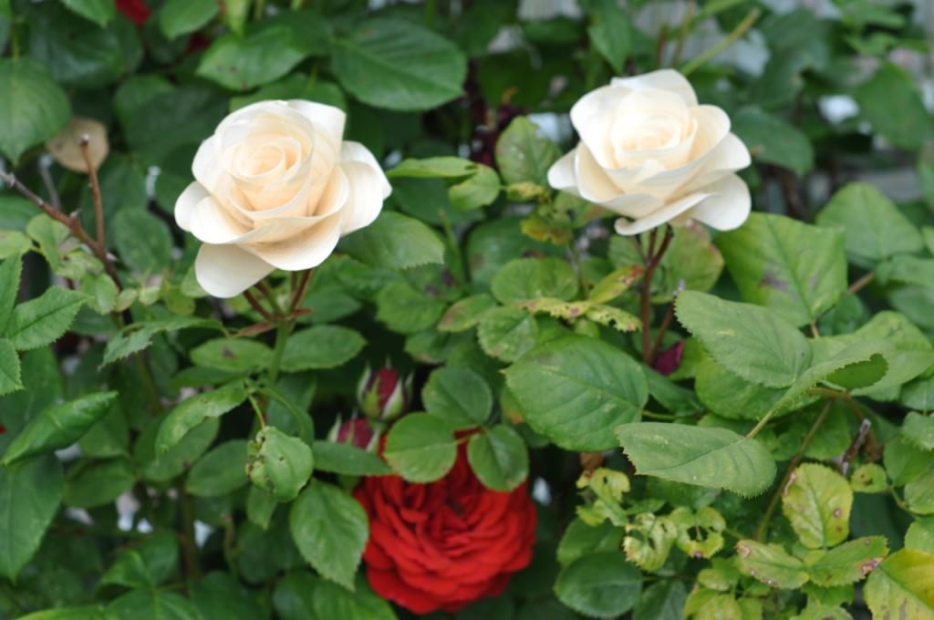 Wooden Flower - DSC_9558