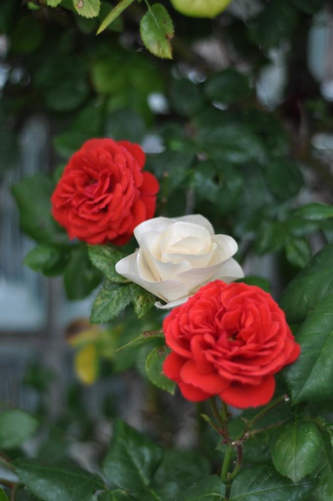 Wooden Flower - DSC_9569